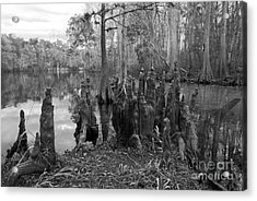 Swamp Stump Acrylic Print by Blake Yeager