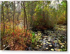 Swamps In Sc Acrylic Print by Susanne Van Hulst