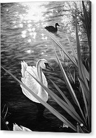 Swan 1 Acrylic Print
