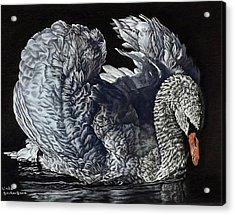 Swan #2 Acrylic Print