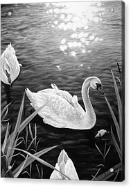 Swan 3 Acrylic Print