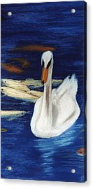 Acrylic Print featuring the pastel Swan And Koi by Jan Amiss
