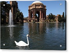 Swan At The San Francisco Palace Of Fine Arts - 5d18069 Acrylic Print by Wingsdomain Art and Photography