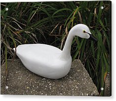Acrylic Print featuring the sculpture Swan-derful by Kevin F Heuman