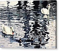 Acrylic Print featuring the photograph Swan Family On The Rhine by Sarah Loft