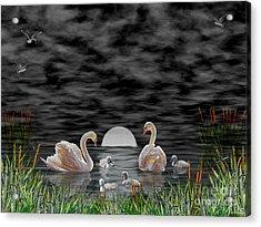 Acrylic Print featuring the digital art Swan Family by Terri Mills
