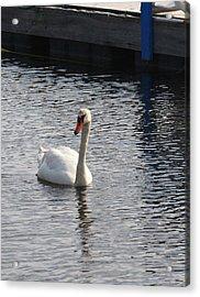 Swan Acrylic Print by Gerald Mitchell