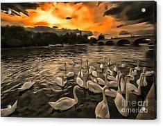 Swan Gloaming Kingston U K Acrylic Print