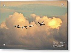 Swan Heaven Acrylic Print