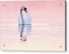 Swan In Pink Acrylic Print by Roeselien Raimond