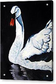 Swan In Shadows Acrylic Print by Lil Taylor