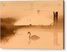Swan In The Mist Acrylic Print by Roeselien Raimond