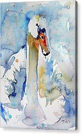 Swan Acrylic Print by Kovacs Anna Brigitta