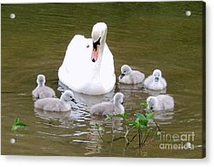 Acrylic Print featuring the photograph Swan Lake 1 by Bill Holkham