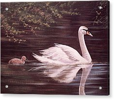 Swan Lake Acrylic Print by Cathal O malley