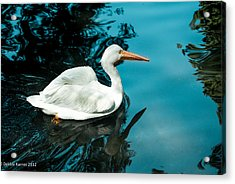 Acrylic Print featuring the photograph Swan Lake by Debbie Karnes