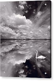 Swan Lake Explorations B W Acrylic Print by Steve Gadomski