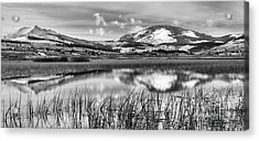 Swan Lake Icy Reflections Black And White Acrylic Print by Adam Jewell