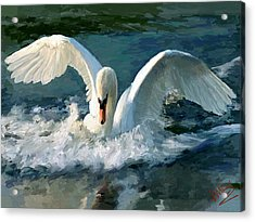 Swan Lake Acrylic Print by James Shepherd