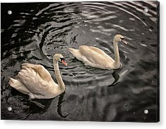 Swan Lake Acrylic Print by Martin Newman