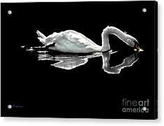 Swan Lake Nature Photo 2121a Acrylic Print