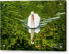Swan Lake Nature Photo 892 Acrylic Print