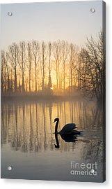 Swan Lake Acrylic Print by Tim Gainey