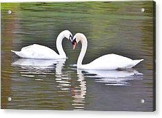 Swan Love Acrylic Print