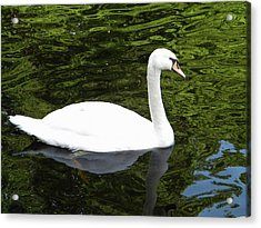 Acrylic Print featuring the photograph Swan by Manuela Constantin