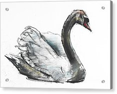 Swan Acrylic Print by Mark Adlington