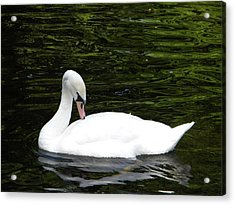 Acrylic Print featuring the photograph Swan May by Manuela Constantin