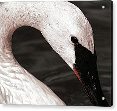 Acrylic Print featuring the photograph Swan Neck by Jean Noren