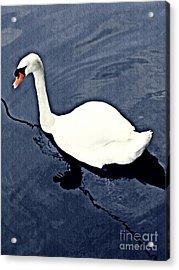 Acrylic Print featuring the photograph Swan On The Rhine by Sarah Loft