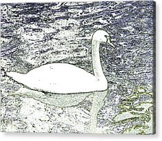 Acrylic Print featuring the photograph Swan Sketch by Manuela Constantin