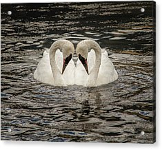 Acrylic Print featuring the photograph Swan Times Two by Mary Hone