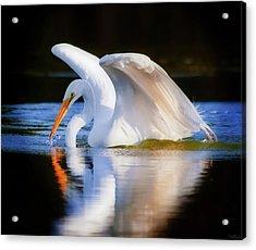 Swanlike Acrylic Print
