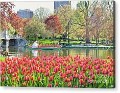 Swans And Tulips 2 Acrylic Print by Susan Cole Kelly