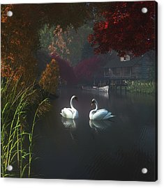 Swans In A River Near Home Acrylic Print