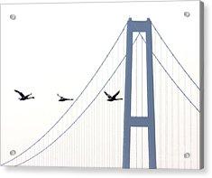Swans In Line Acrylic Print by Toon De Zwart
