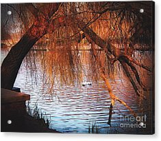 Acrylic Print featuring the photograph Swans On The Avon by Sue Melvin