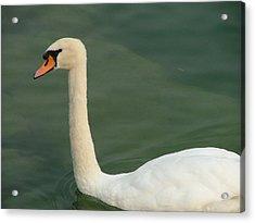 Swan's Portrait Acrylic Print by Rita Fetisov