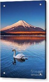 Swany Acrylic Print by Tatsuya Atarashi