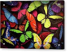 Swarm Of Butterfles  Acrylic Print by Sandi OReilly