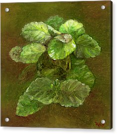 Swedish Ivy Acrylic Print