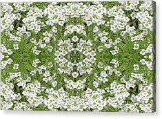 Acrylic Print featuring the digital art Sweet Alyssum Abstract by Linda Phelps