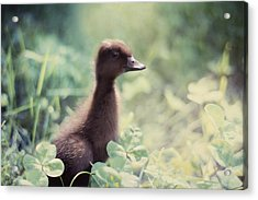 Sweet As Clover Acrylic Print by Amy Tyler
