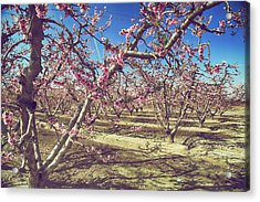 Acrylic Print featuring the photograph Sweet As Sugar by Laurie Search