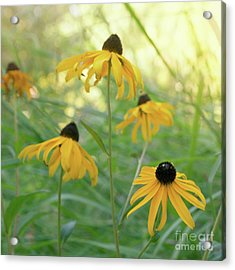 Acrylic Print featuring the photograph Sweet August by Cindy Garber Iverson