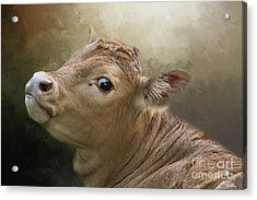 Acrylic Print featuring the photograph Sweet Baby by Eva Lechner