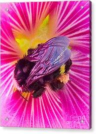 Sweet Bee Acrylic Print by JoAnn SkyWatcher